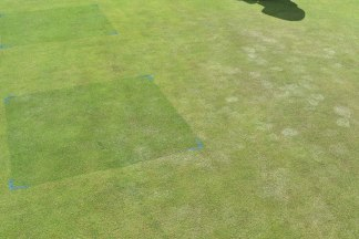 Stressed greens turf show effects of footmarks - compared to treated in Ryder trial demo at Turf Science Lite 2018 - Old Thorns Liphook mr