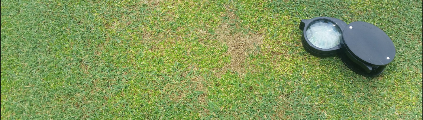 anthracnose turf disease