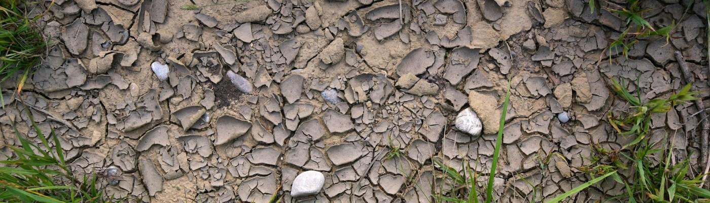 Turf Soil Moisture Levels