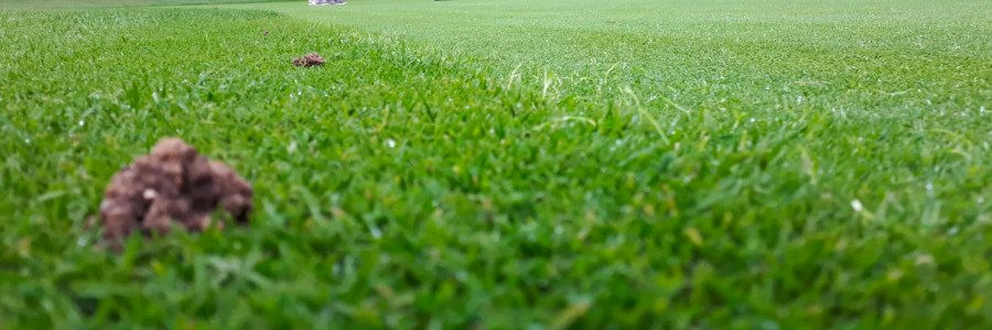 Frequently Asked Questions about Turf