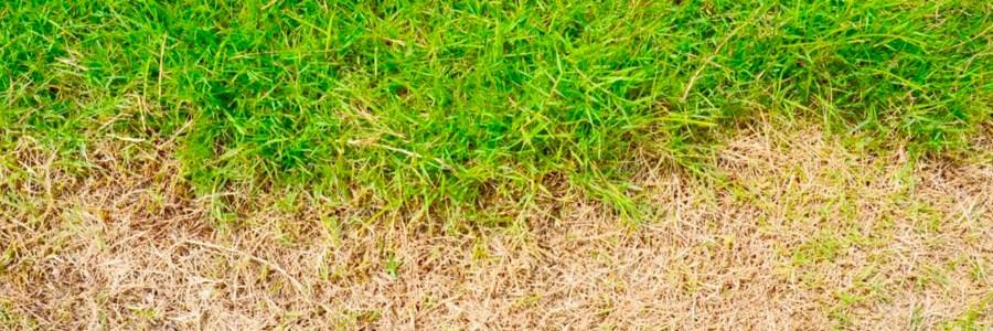 Leather Jacket Golf Course damage
