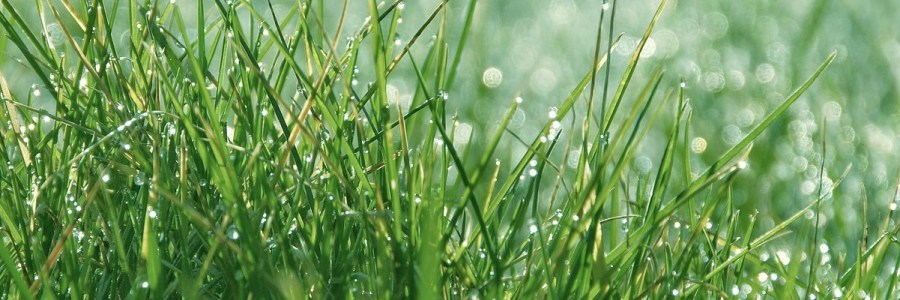 Turf Blog and Podcast - How wet was October