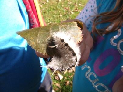Mariah found a tussock moth caterpillar.