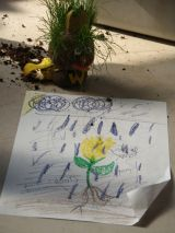 Sonny's drawing reinforces her knowledge of what plants need to thrive.
