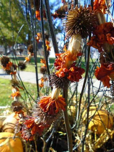 Our marigold and Echinacea seed head garlarnd decorate our Halloween tree.