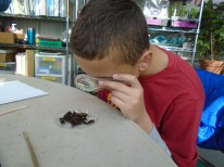 Checking out the worms with a magnifying glass is always a hit!