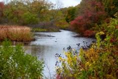 Freshwater wetland. Photo by Robert Lorenz.