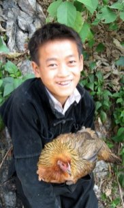 hmong boy and his chicken