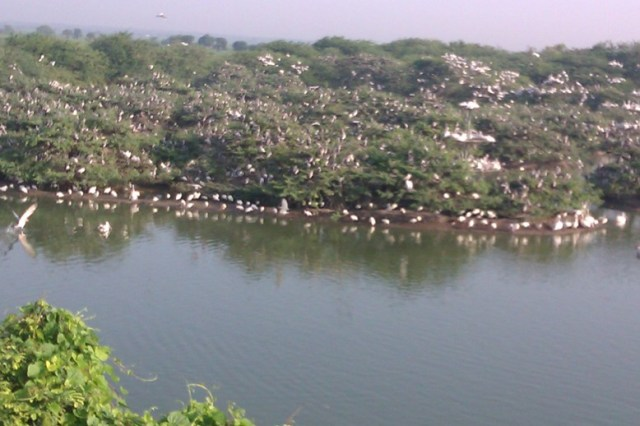 Uppalapadu lake with birds