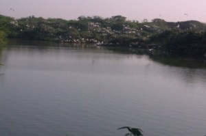 Uppalapadu lake