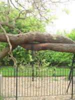 Old trees at Royal Botanical Garden