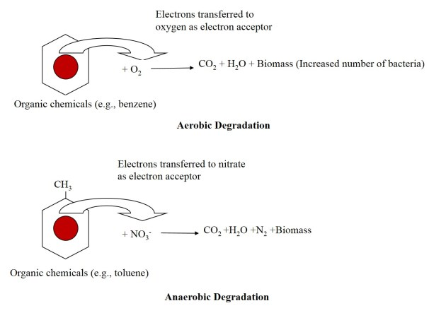 Biodegradation process_schematic representation