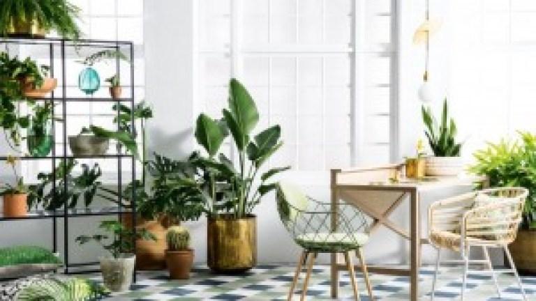 spring-botanicals-indoor-plants-greenery-expert-tips-sam-mcadam-cooper-joseph-gardner-danielle-selig-sept-15-20150915124112~q75,dx800y-u1r1g0,c--