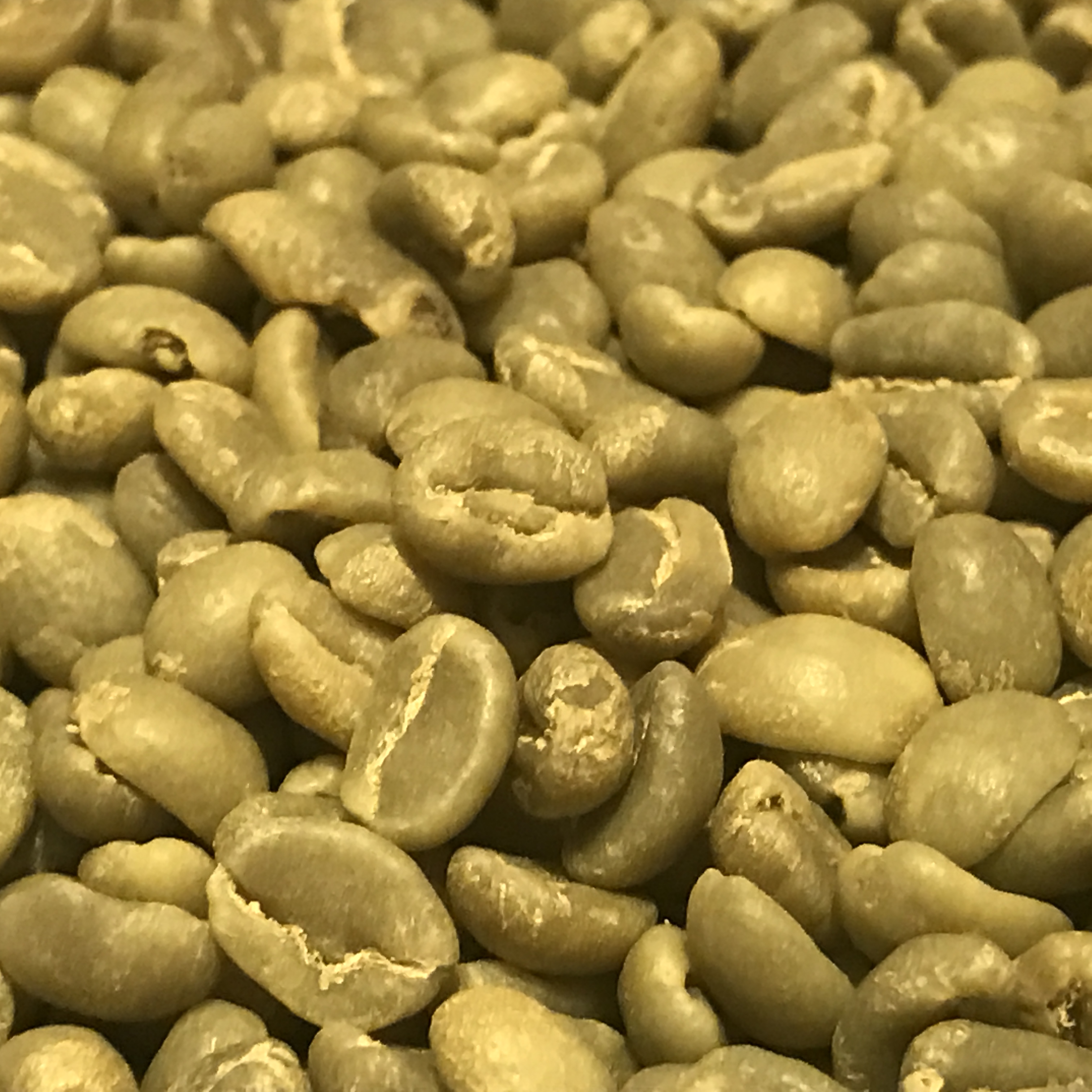 Green Coffee Beans 5 Pounds You Get Free Shipping On 5 Poiunds