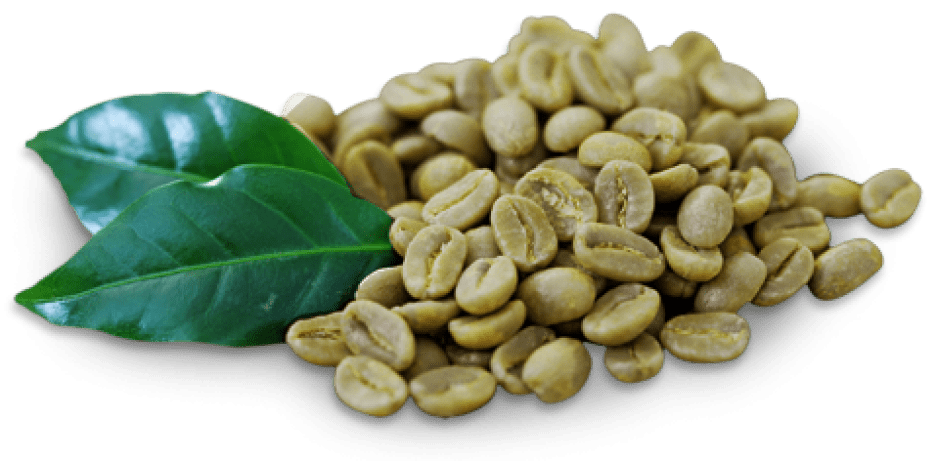 the benefits of green coffee weight loss supplements