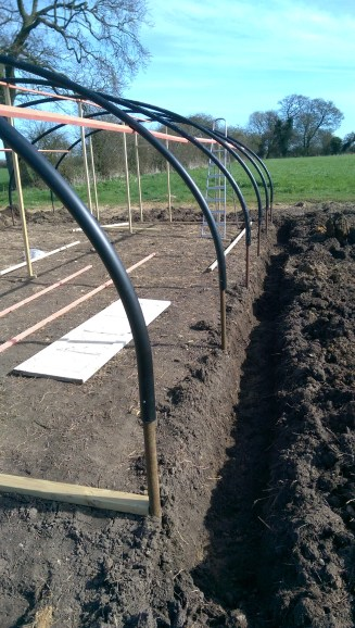 trench down side of polytunnel