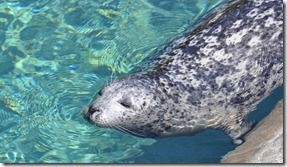 Point Defiance Zoo 001 (105)