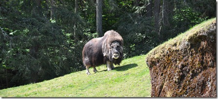 Point Defiance Zoo 001 (115)