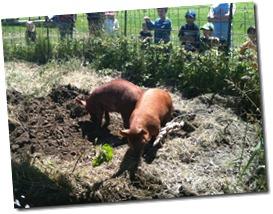jubelee farm 009