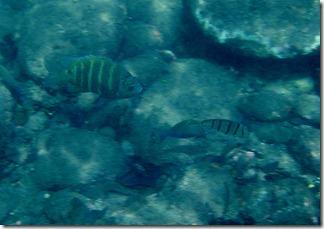 Maui Day 2 039