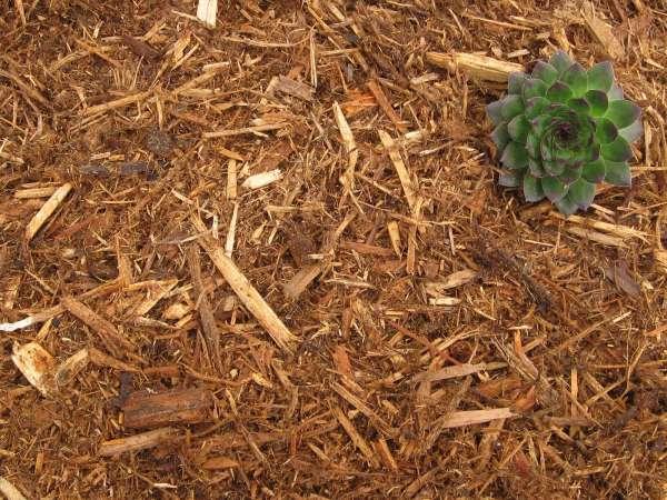 cypress mulch greendell landscape