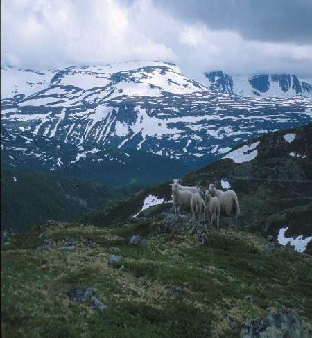 alpine1 62