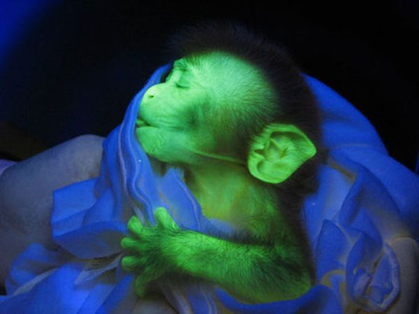 Animals that glow in the dark