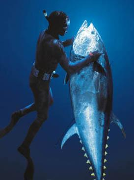 bluefin tuna5