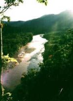 brazilian rainforest 9