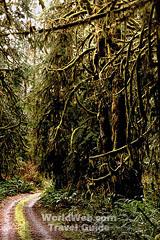 canadas coast rainforest