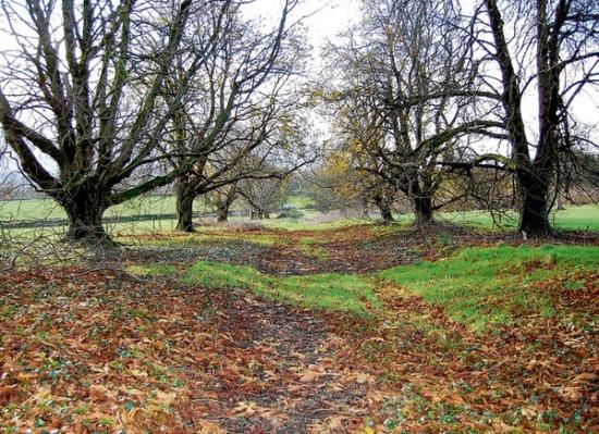 eco burial ground2