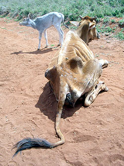 effects of east african drought