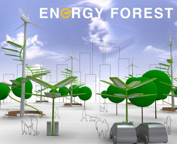 Energy Forest