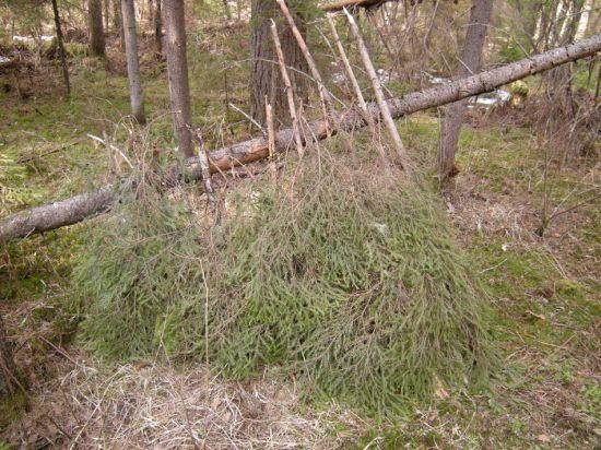green forest shelter 10