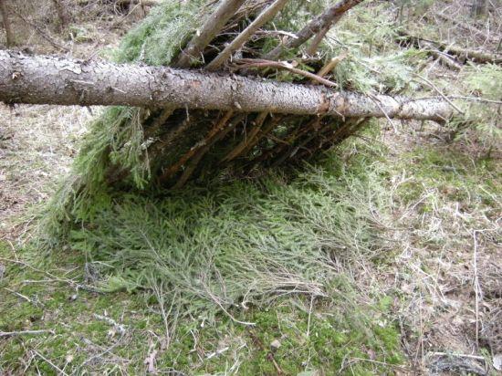 green forest shelter 14
