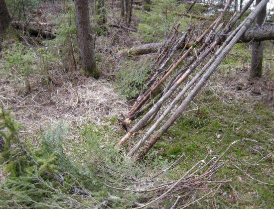 green forest shelter 6
