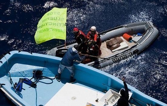 greenpeace activist harpooned