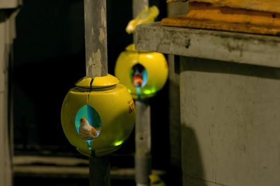 luzinterruptus urban nest light art installation 4