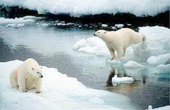 melting north pole