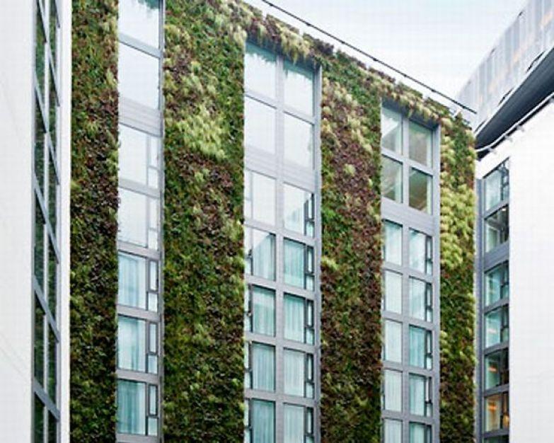 mint hotel green wall