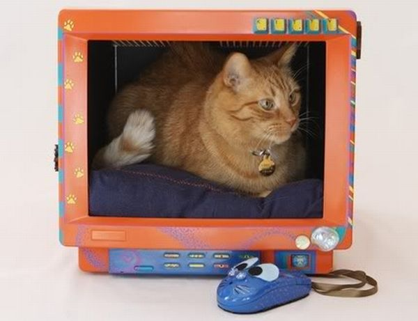 Monitor as pet home