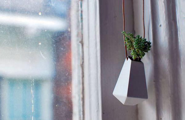 necklace plant 2