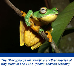 new frog species in lao pdr