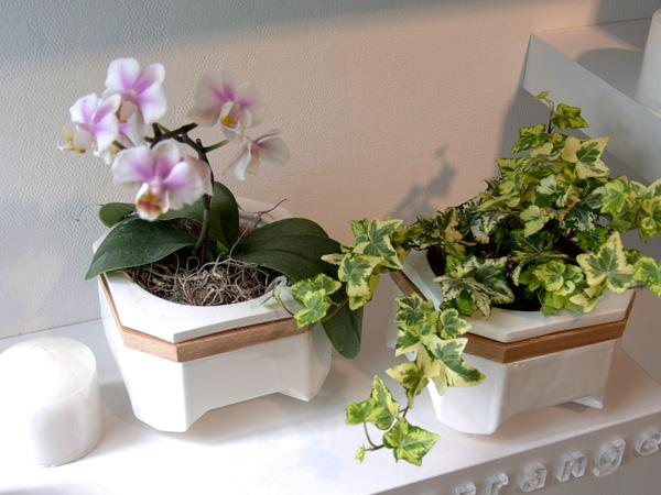 Nuum self watering planter