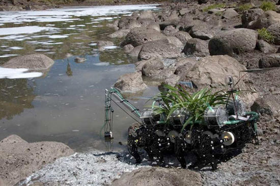 plantas nomadas robot plant 2