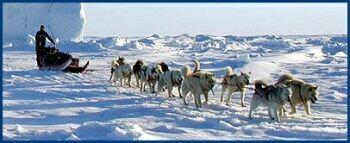polar huskies