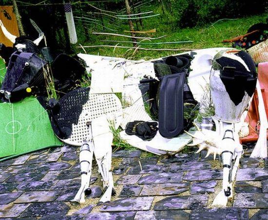 pras bernard cow 6