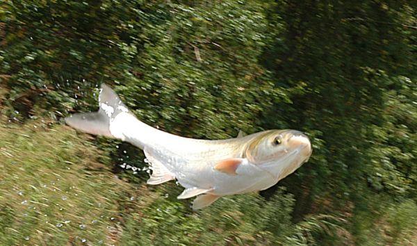 Raining fishes