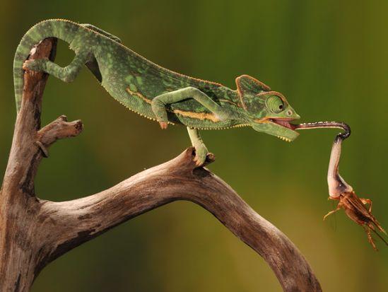 scott linstead captures wild creatures in motion 1
