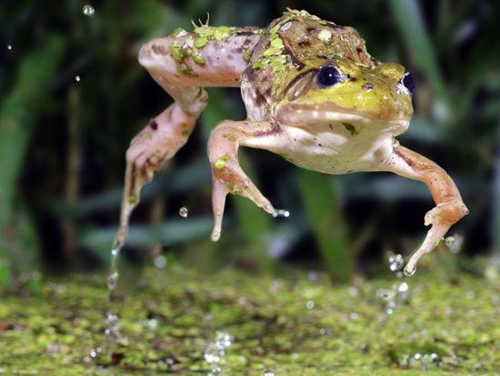 scott linstead captures wild creatures in motion 3